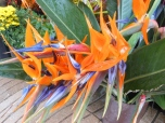 exotic flowers on la rambla