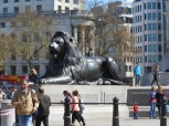 lion in the square